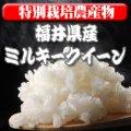 〈工場直売〉福井県特別栽培ミルキークイーン 玄米30kg(送料無料)